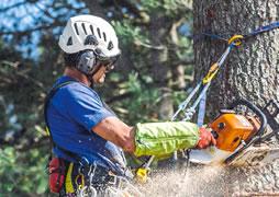 Werkpositionering bij boomsnoeien.
